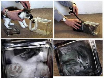 bonzai kediler