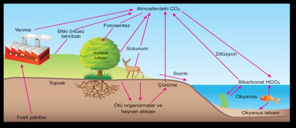 organizmalar